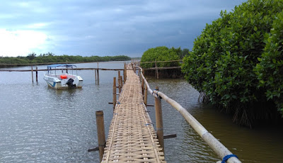 Hutan mangrove Congot, Kulon Progo.