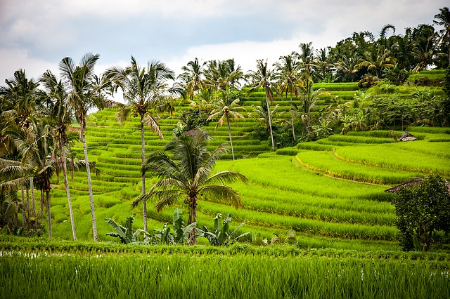 Jatiluwih Bali Rice-Terraces Travel Guide (Tour Tips / Holiday Suggestion) - Mengwi, Taman Ayun, Royal Temple, Wanasari, Village, Bali Butterfly Park, Jatiluwih, Rice-Terraces, World Heritage, Unesco, Tanah Lot Temple, Shrines, Sunset, Bali, Attractions