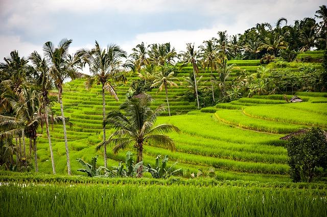 Subak Jatiluwih Rice Fields Terraces (UNESCO) Bali World Heritage Site tour program - Tour, Program, Trip, Itinerary, Plan, Schedule, Mengwi, Taman Ayun, Royal Temple, Jatiluwih, Penebel, Village, Rice-Terraces, Wanasari, Tabanan, Bali Butterfly Park, Tanah Lot, Hindu, Shrines, Beraban, Attractions