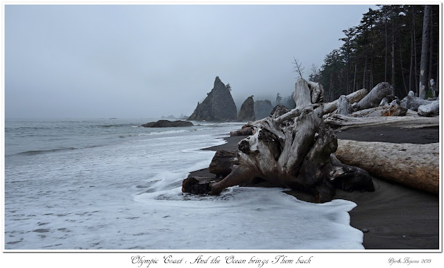Olympic Coast: And the Ocean brings Them back