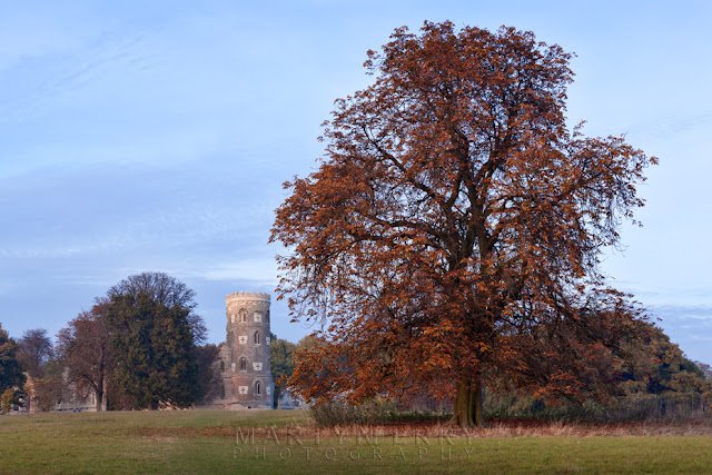 Bright red tree in front of the Wimpole Folly on an autumn evening