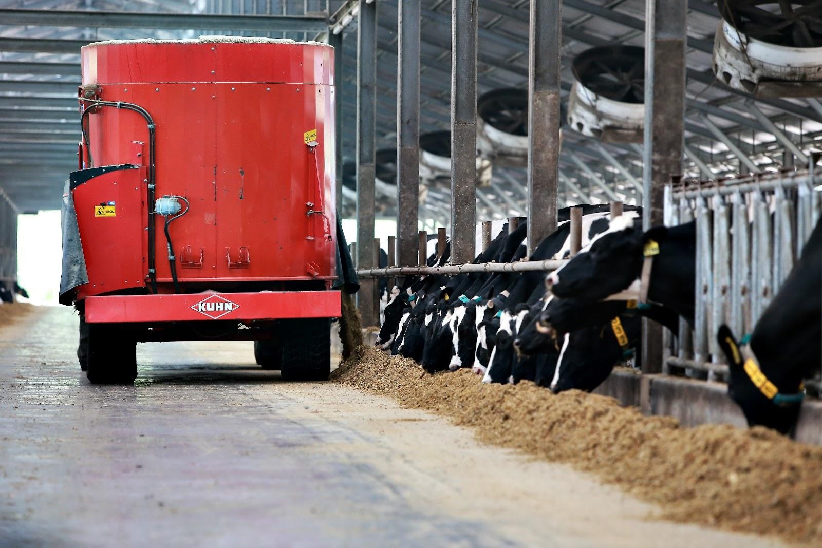 peternakan sapi kin fresh milk