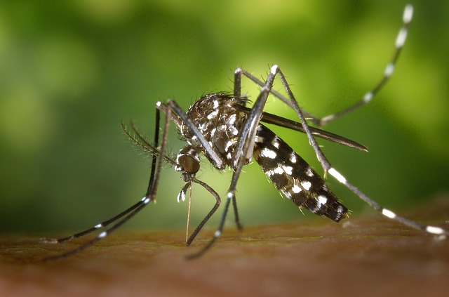 After all, what kind of dengue is dead?
