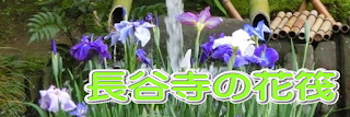 長谷寺の花筏