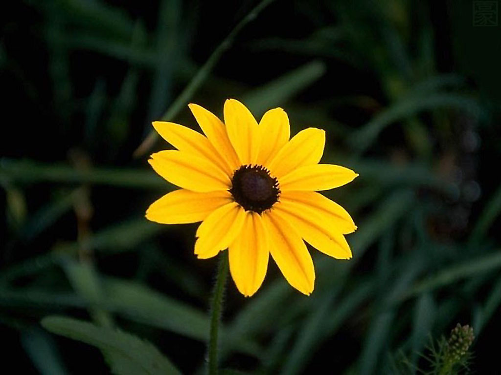 Flowers For Flower Lovers.: Beautiful Flowers Desktop