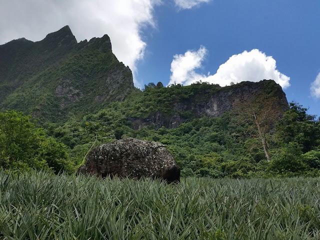 Campo Ananas Polinesia