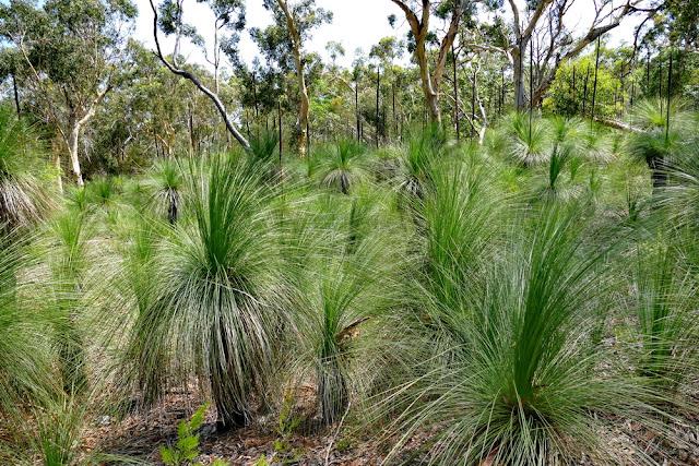 Pflanzen Vegetation Natur Moreton Island Insel Wald