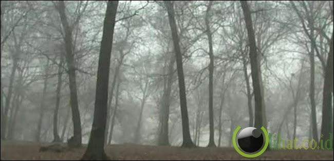 Hutan Hoia-Baciu