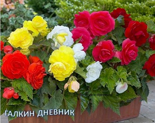Комнатные растения, цветы.