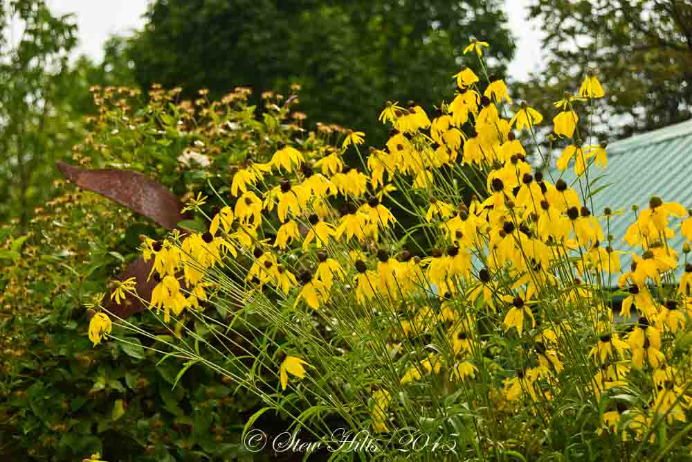 Tall Yellow Flowers