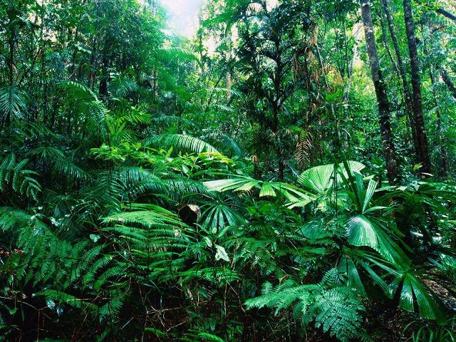Macam-macam Bioma Beserta Ciri-cirinya