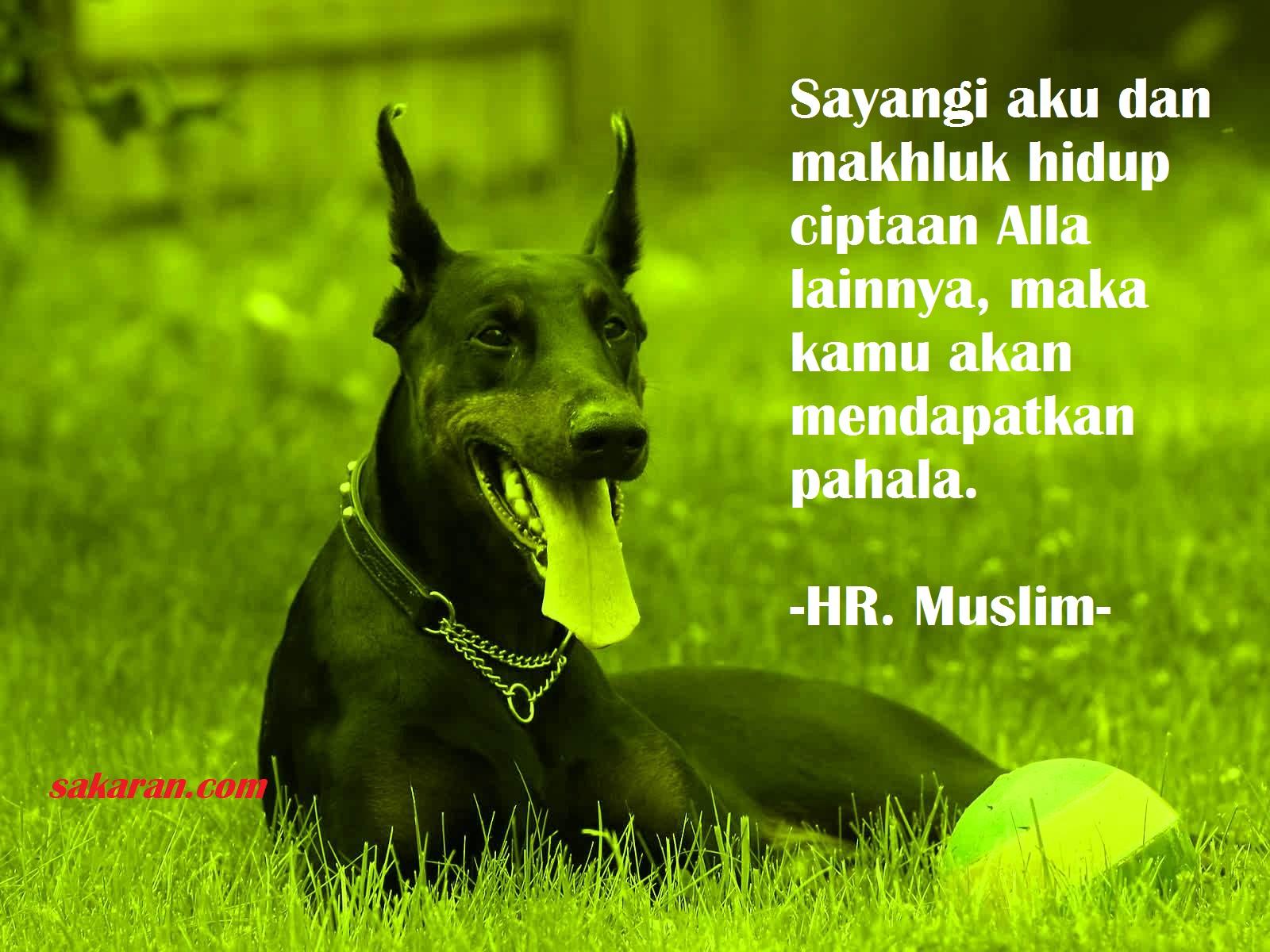 Pahala Karena Menyayangi Hewan Kisah Laki Laki Memberi Minum Anjing Kehausan Sakaran
