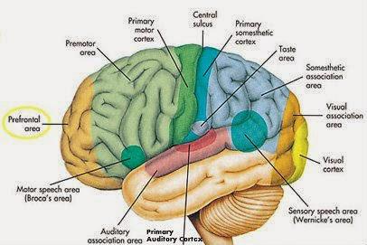 Penyebab Kanker Otak