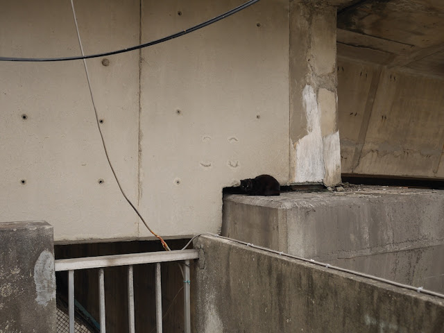 black cat on a high supporting structure for a bridge