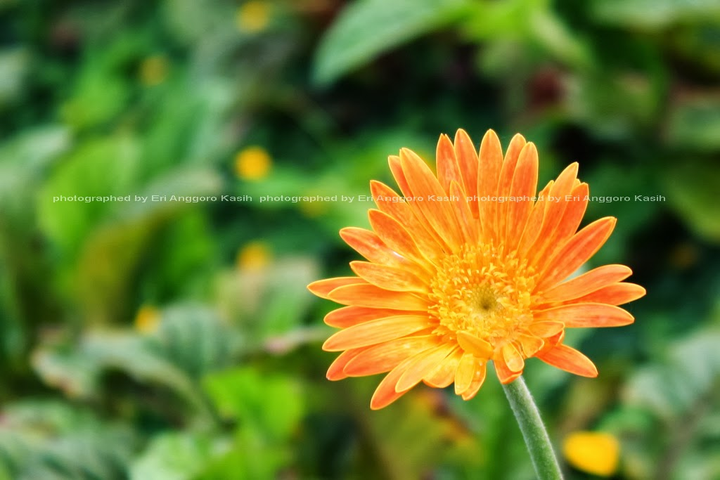 Bunga di sudut taman kota Dadaha