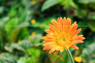 Bunga di sudut taman