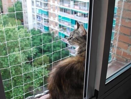 9f1cdec46 El gato que duerme en mi ventana | Metiendo Reversa