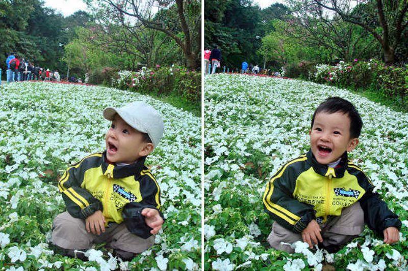 台北陽明山國家公園花季