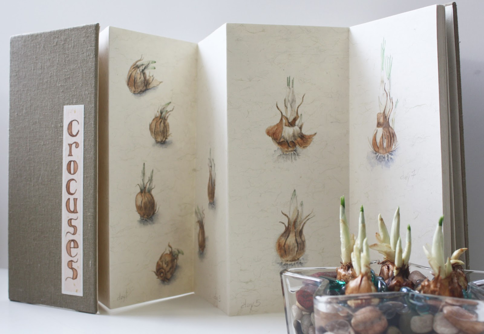 Carsley Studio Artists Blog Mid Winter Project For Botanical Art