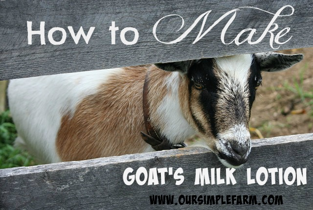 How to Make Goat's Milk Lotion