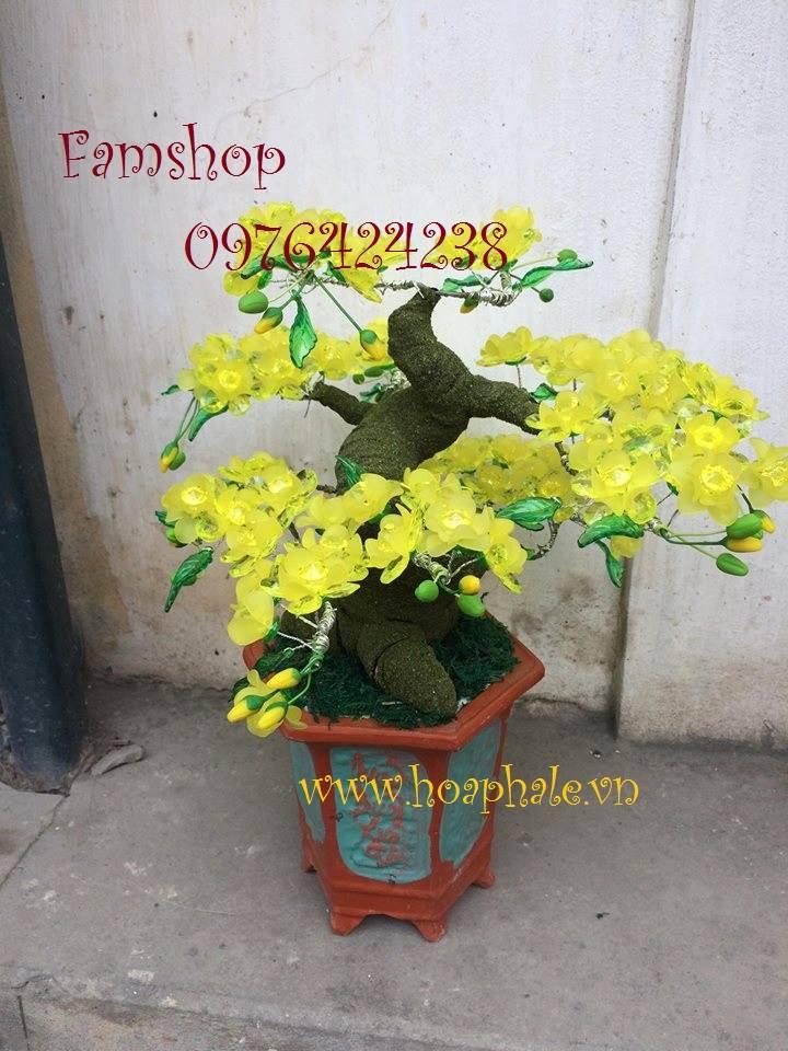 Goc bonsai mai dao tai Cat Linh