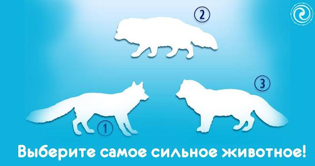 Выберите самое сильное животное и узнайте, о каких аспектах вашей жизни говорит ваш выбор!