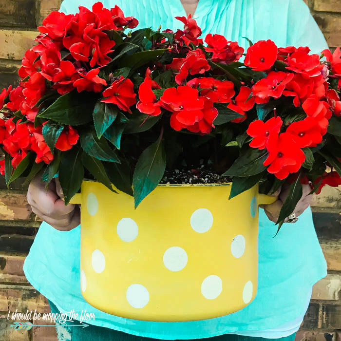 Polka Dot Planter