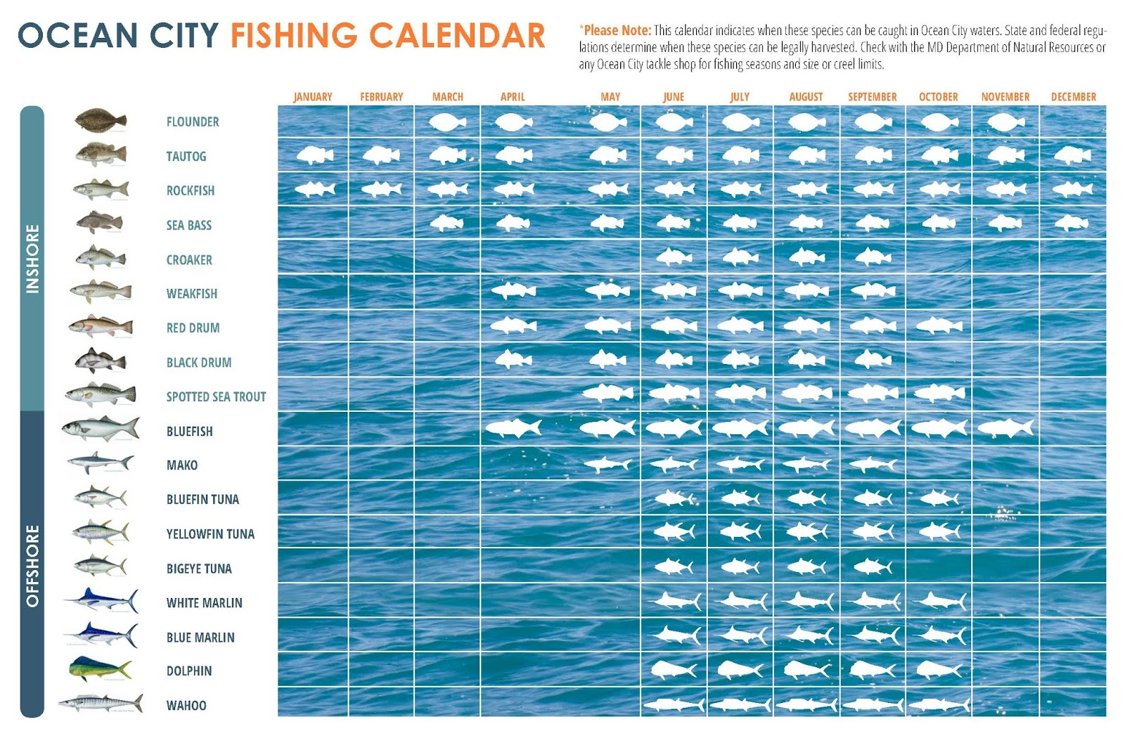 Chesapeake lifestyle maryland 39 s eastern shore for Fishing almanac calendar