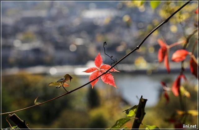 ảnh lá mùa thu tháng 9