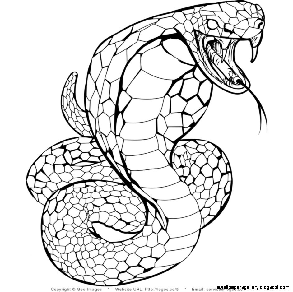 rattlesnake coloring pages - snake drawing for kids wallpapers gallery