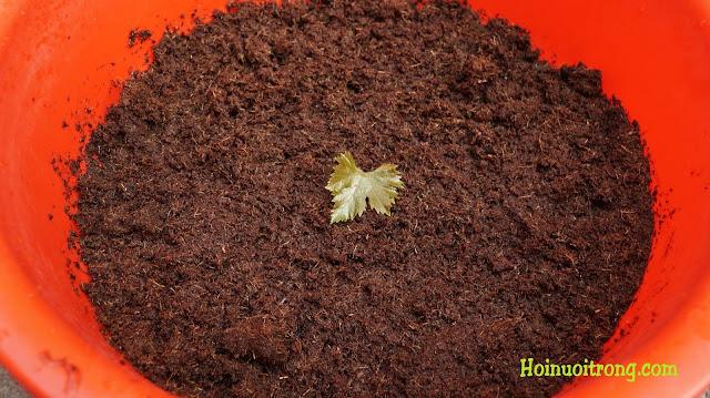 Thành phẩm đất sạch đã ra lò, sau đó mang đi trồng rau mầm thì hết sẩy