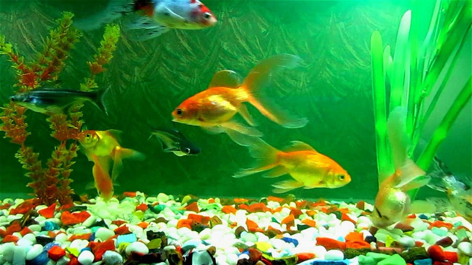 Fish Aquarium: A Good Remedial Measure for Vastu Defect