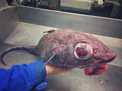 أسماك المرعبة
