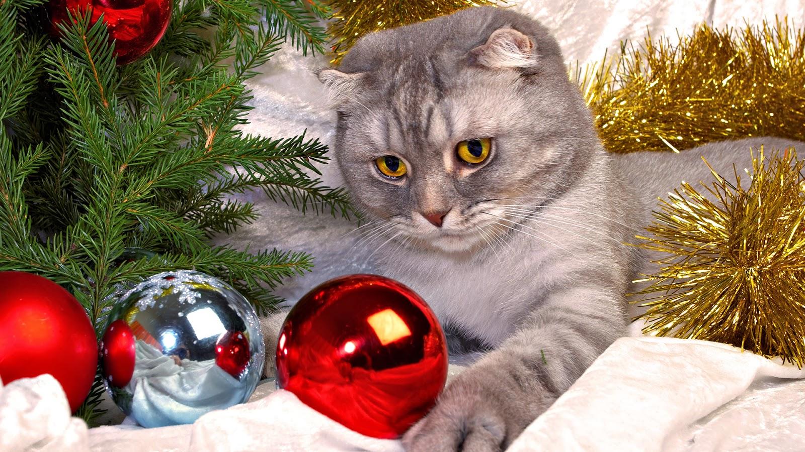 Cute Cat Wallpaper 3d Cute Cats Christmas Hd Wallpapers Hd Wallpapers Blog