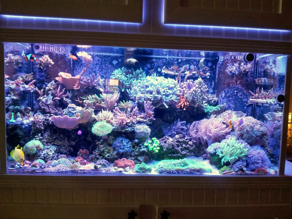 LED Aquarium Lighting Blog | Orphek: Orphek Atlantik ...