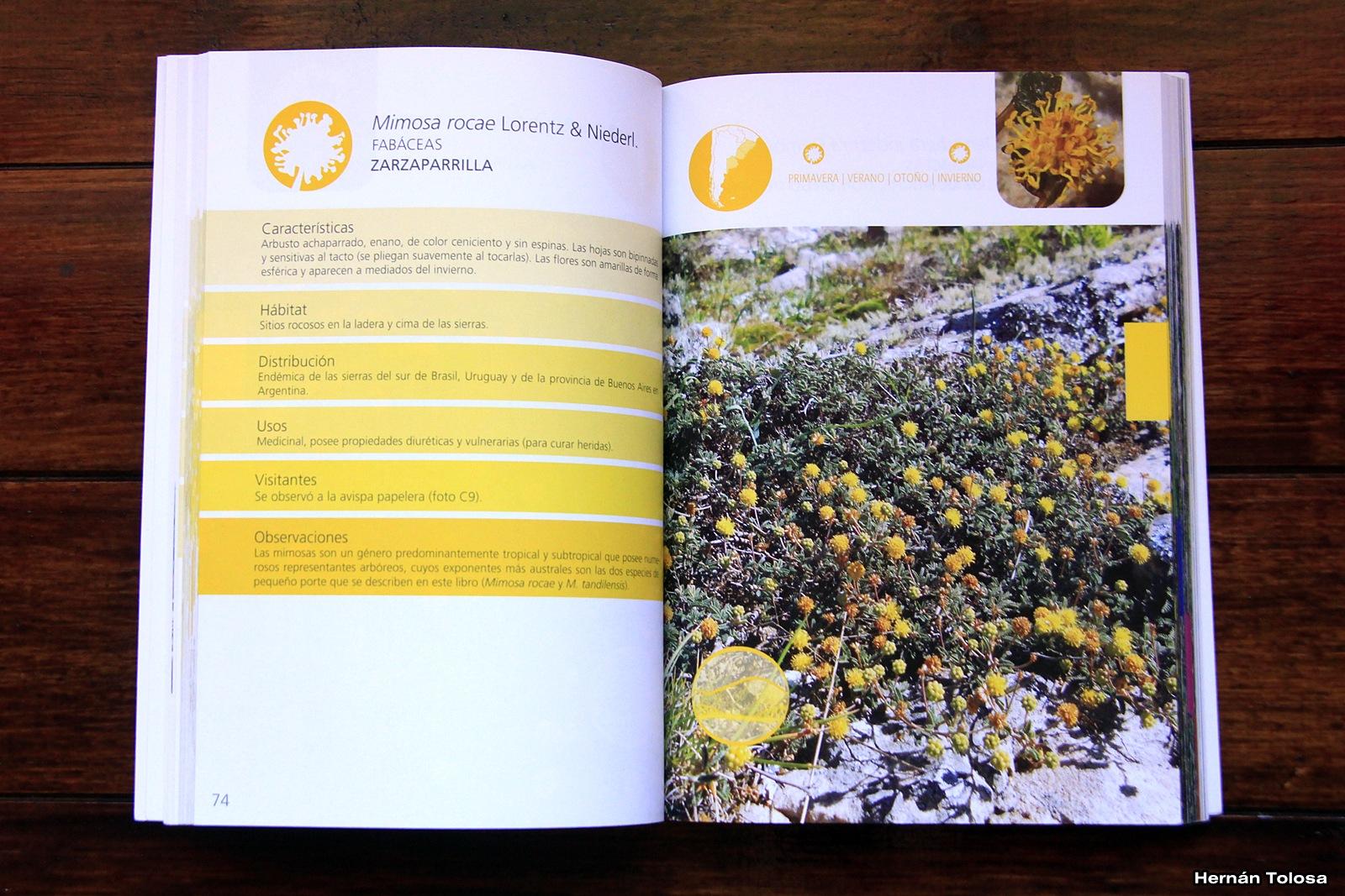 Flora Bonaerense: Flores de las Sierras de Tandilia