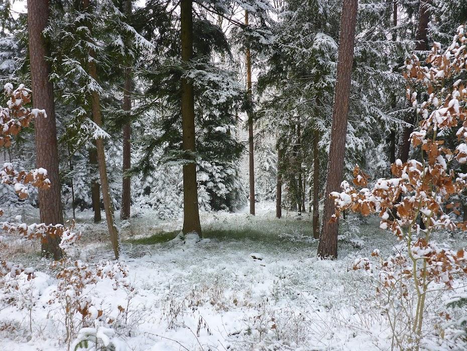 Снежный, лес, деревья