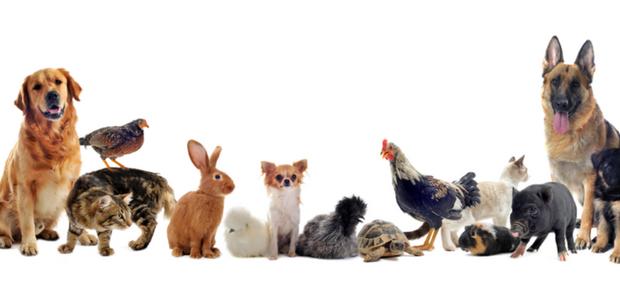Périphrases pour designer des animaux