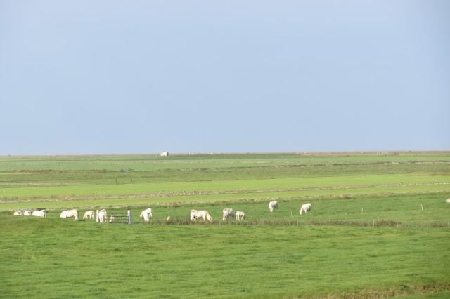 Friesland met Waddenzee op de achtergrond