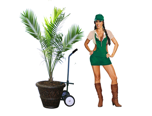Hand Trucks For Heavy Potted Plants