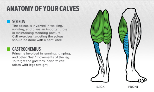 Avoid Mistakes Limiting Your Calf Size