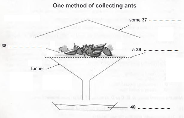 Collecting Ant Specimens