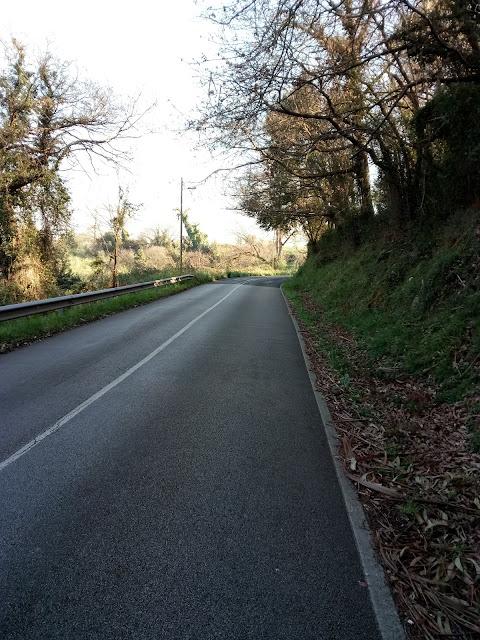 Carretera rodeada de vegetación