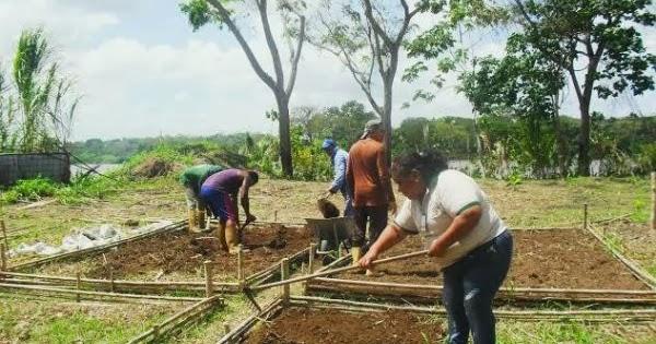 Prensa MinAgricultura: INIA conforma brigadas productivas para  establecimiento de huerto institucional