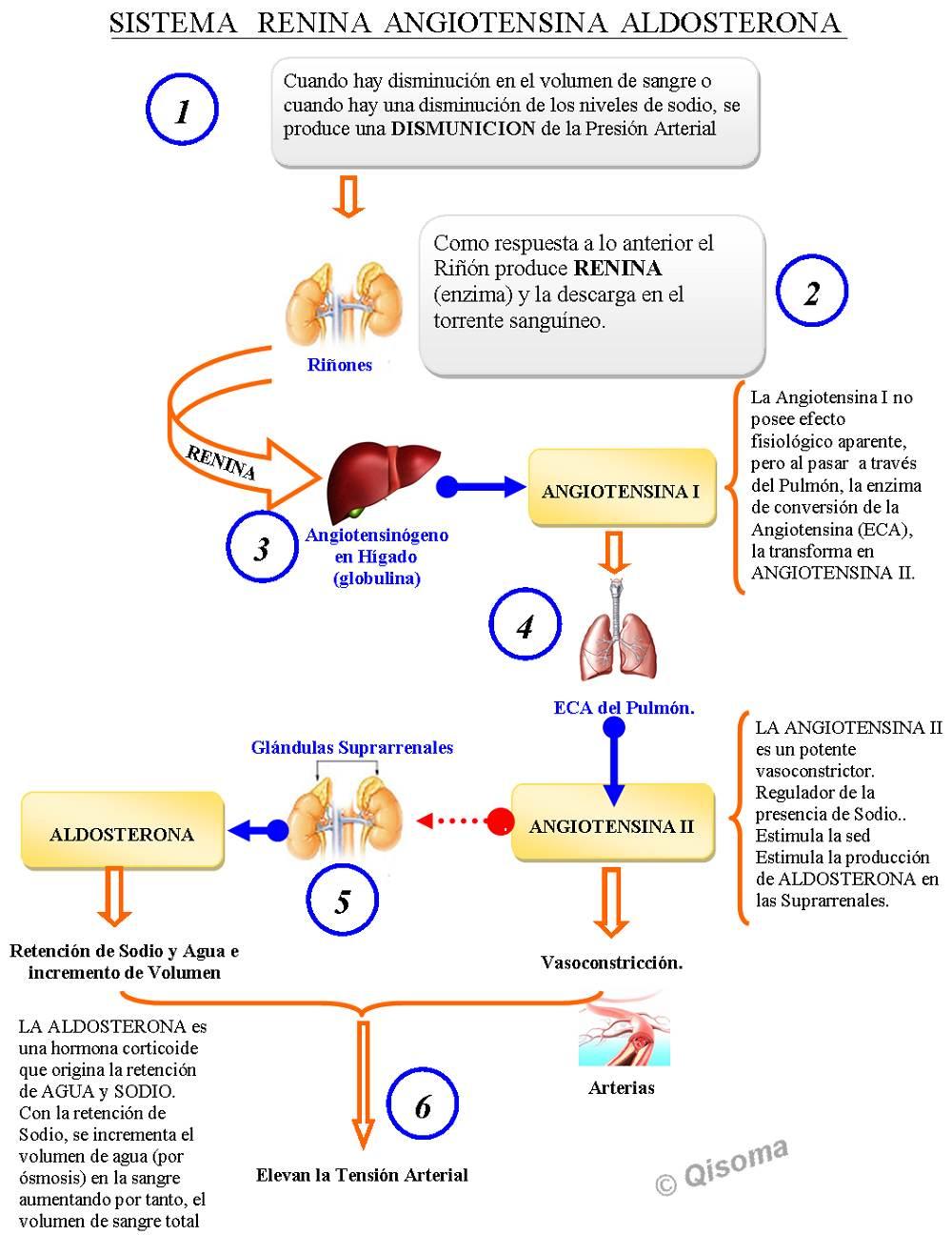 testosterona efectos secundarios esteroides