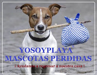 https://www.facebook.com/groups/mascotasperdidasrivieramaya/