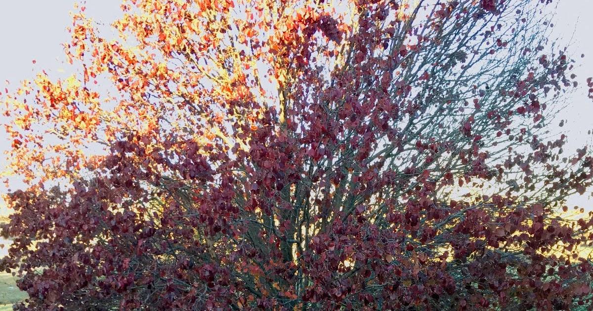 Kansas prairie garden december and we re still raking leaves