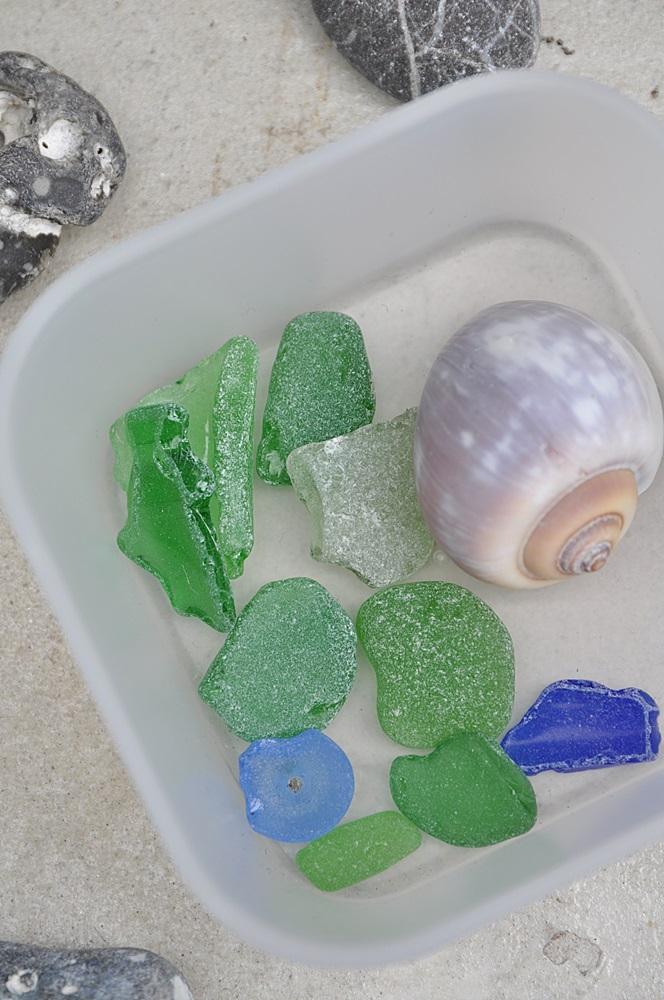 Strandlgas und Muscheln Schnecke