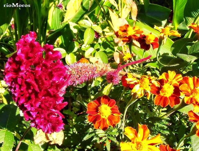 Llega la primavera, llegan las flores