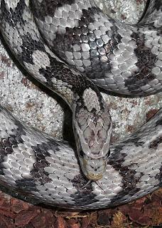 arti mimpi di gigit ular